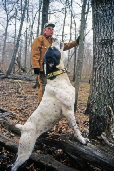 In the fraternity of treeing-dog enthusiasts, Jim Rhea of Wynne, Arkansas, is legendary. He raises and trains some of the world's finest pedigree squirrel dogs. Dogs from his Limbgripper line, including Limbgripper Ranger pictured here, have won every major award in the sport, including dozens of state, regional, U.S. and world championships.