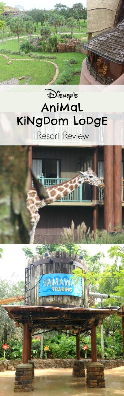 Our family's favorite place to stay at Walt Disney World is Animal Kingdom Lodge, hands-down. There is SO much we love about it, which I will share in detai