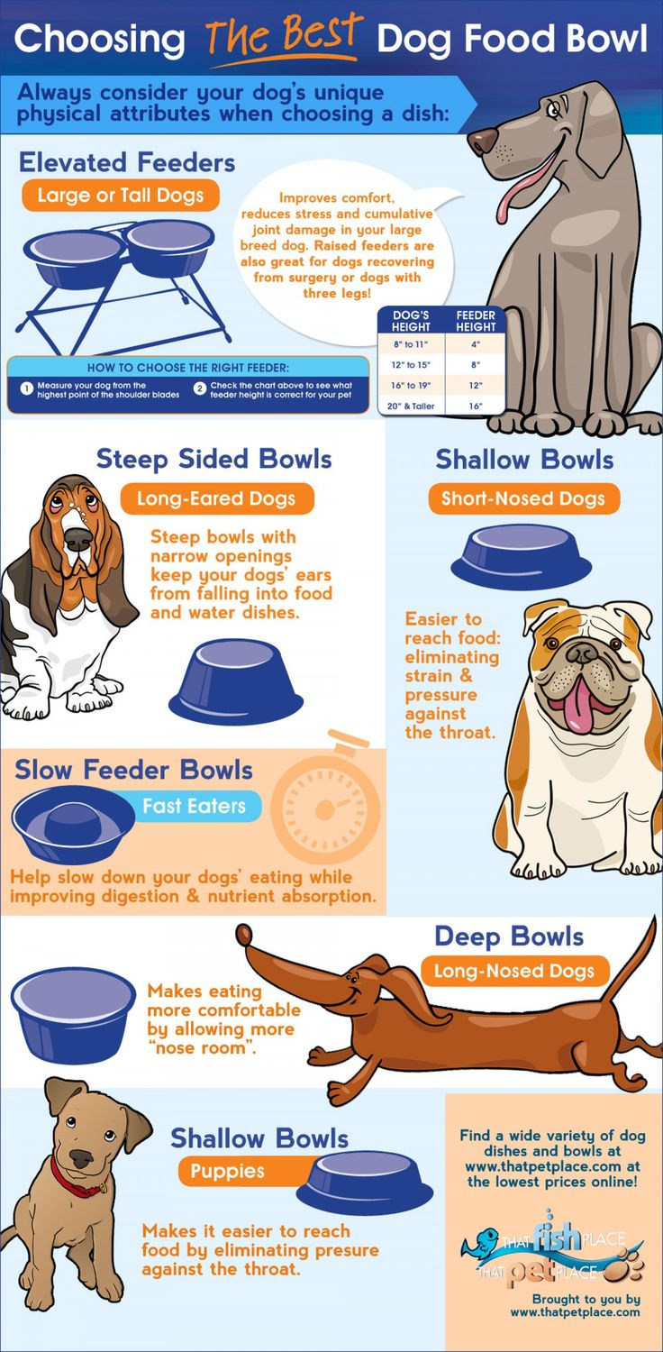 How to choose the best bowl for your dog's breed
