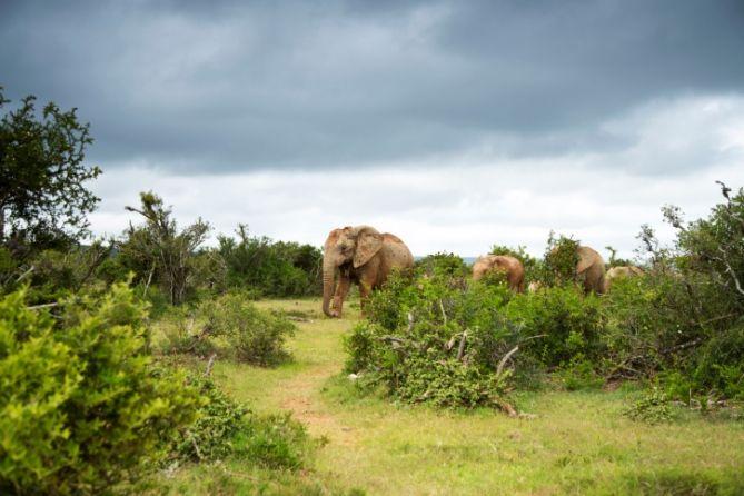Tierbeobachtungen in Südafrika - Safaris, Tipps, Orte