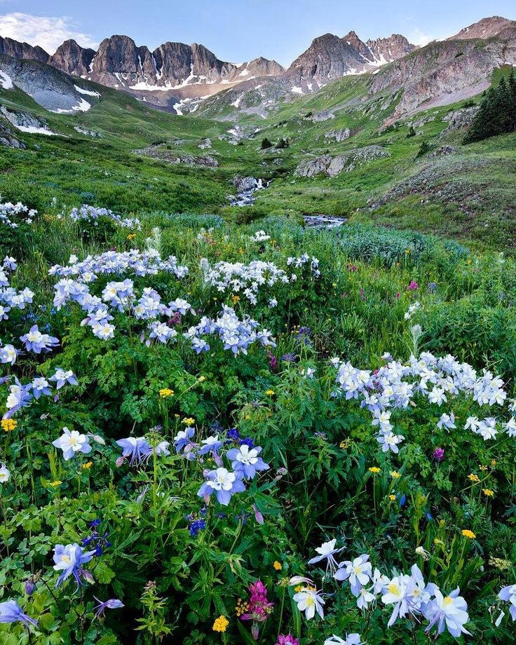 Double Tap if you wish you were here! Southwest #Colorados Alpine Loop National Backcountry Byway provides access to some of the most spectacular scenery anywhere in the #Rockies. Here jagged peaks (as tall as 14000 feet in elevation) rise above rushing streams and wildflower-filled meadows. A few miles further west the American Basin in Handies Peak #Wilderness Study Area has a plethora of wildflowers including fields of Colorados state flower the columbine. You can scale 14000-foot…