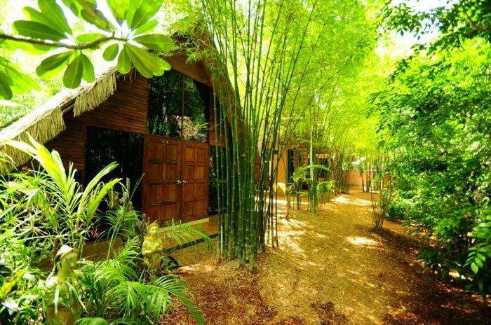 planter-des-bambous-joli-jardin-de-bambous-et-cabane-en-bois