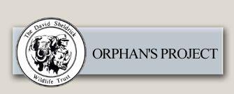 QUANZA - Elephant Orphan History - David Sheldrick Wildlife Trust