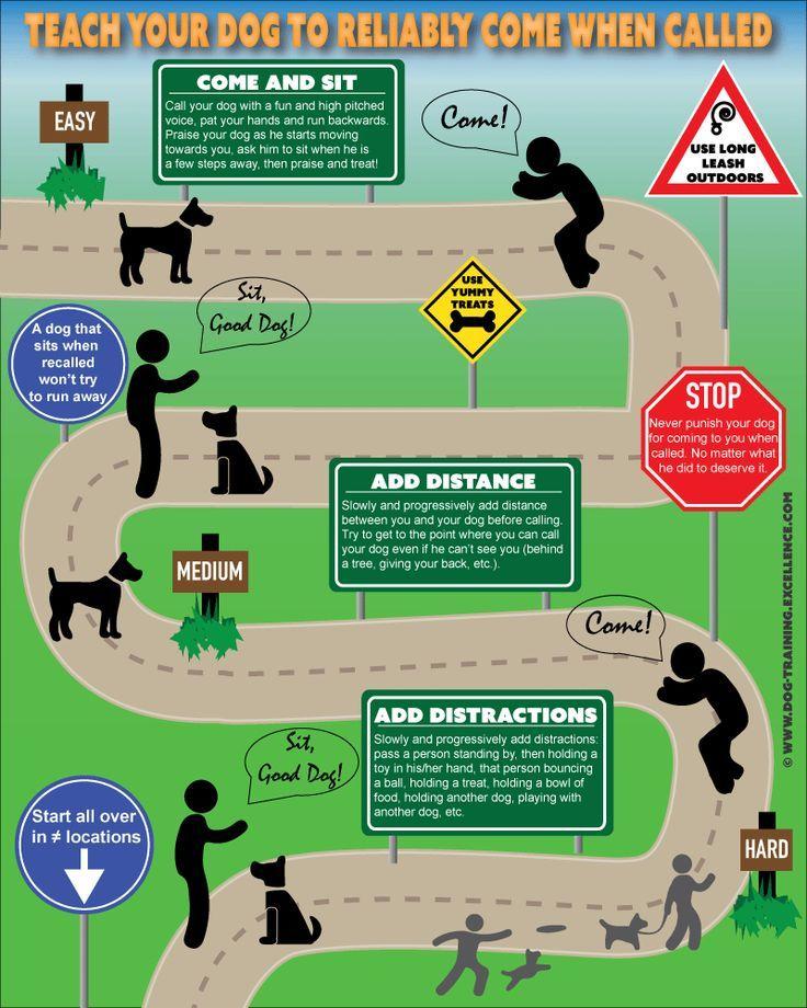 Dog Training Leash Training Your Dog Dog Training Books Dog