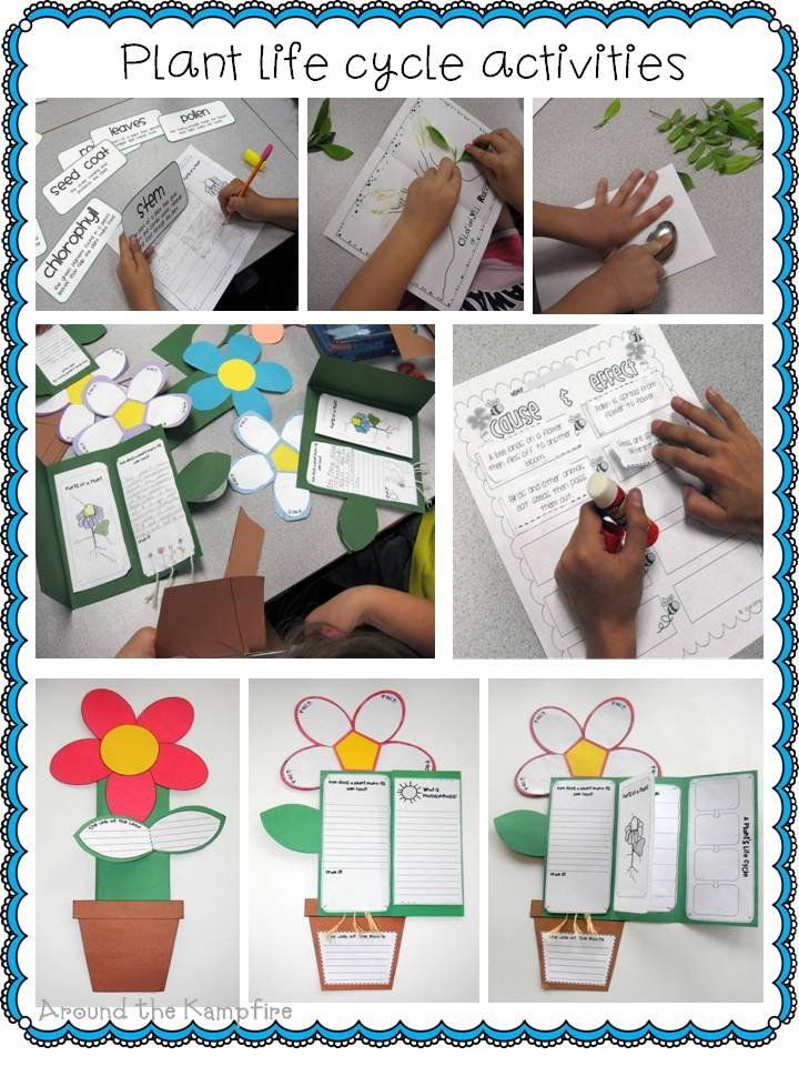 Life Cycle of Plants: includes mini-labs, reading strategies, informational writing, graphic organizers, observation journals, diagrams, plant vocabulary cards, anchor charts and culminating foldable project book perfect for assessment. $