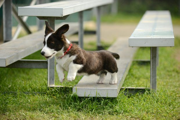 Officials weigh separate times for little dogs in city dog parks | Alaska Dispatch News:
