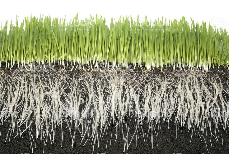 grass roots soil royalty-free stock photo