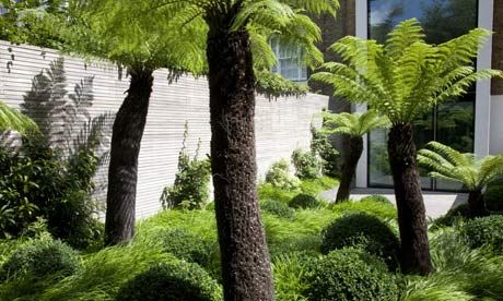 A North London garden with giant ferns, very Where the wild things are...