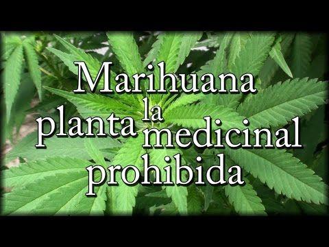 Marihuana, la planta medicinal prohibida (con Josep Pàmies) - YouTube