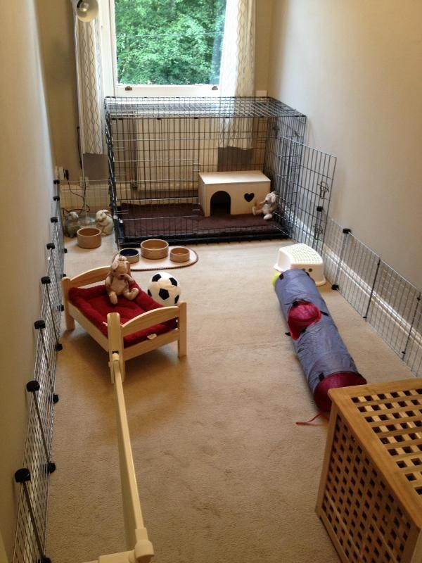 Dog crate, with access to a full room & well bunny proofed skirting boards.