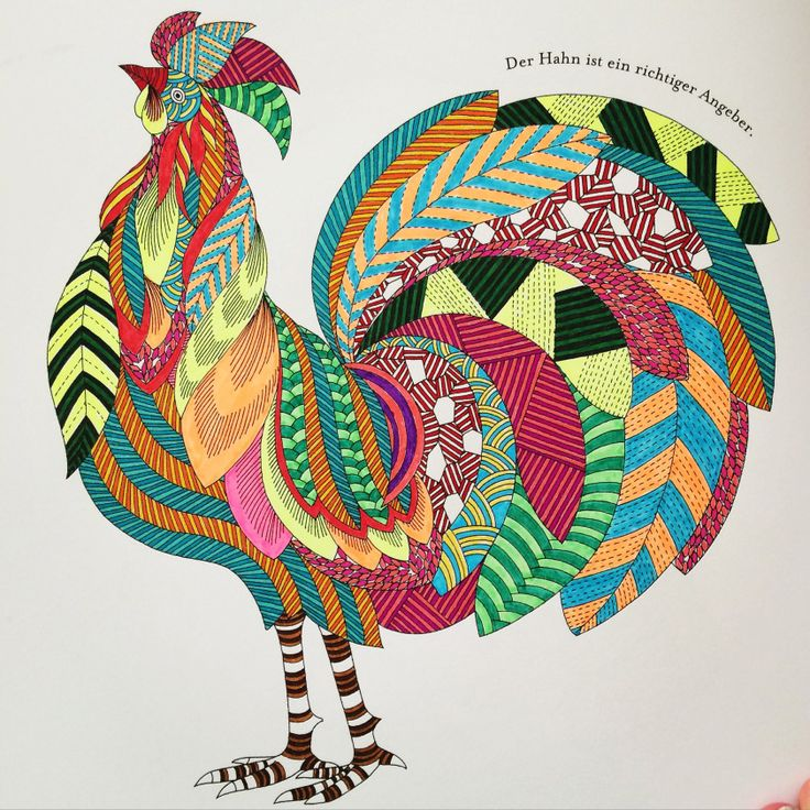 116 Best Images About Millie Marotta Colouring Books On