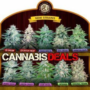crop king seeds find the best cannabis seeds online