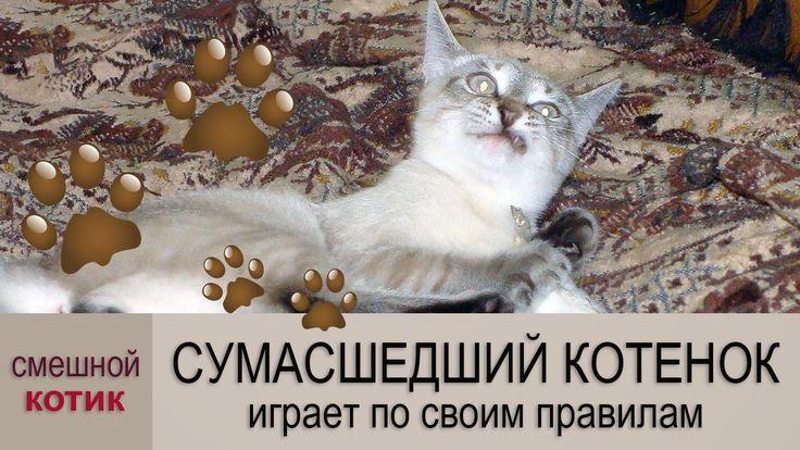Смешные котики иногда становятся сумасшедшими…