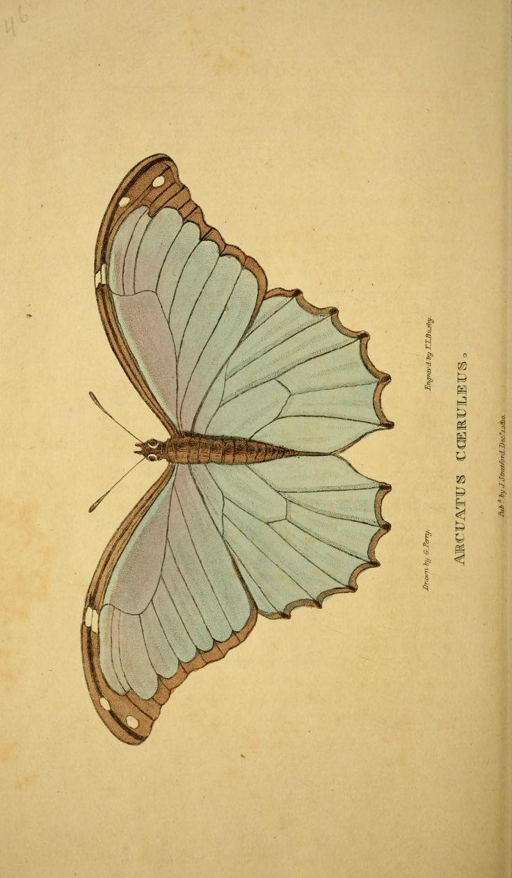 607 best MOTHS AND BUTTERFLIES images on Pinterest   Butterflies ...