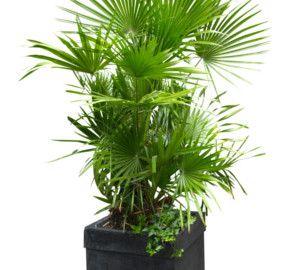 Plantes qui s'adaptent à une faible luminosité