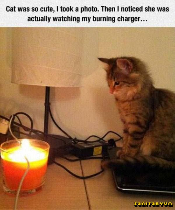 a dog would probably bark a warning but this is.. well.. a cat ☺