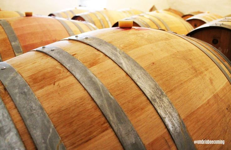 The wine cellar #Montegiove