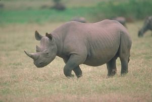 Hluhluwe game reserve. The Rhino capital of Africa.