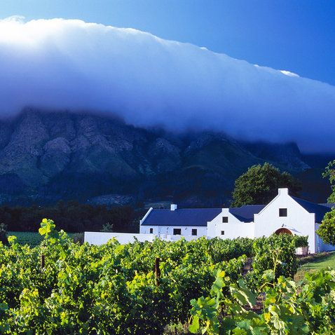 Best Vineyards in Cape Town's Winelands | Travel + Leisure