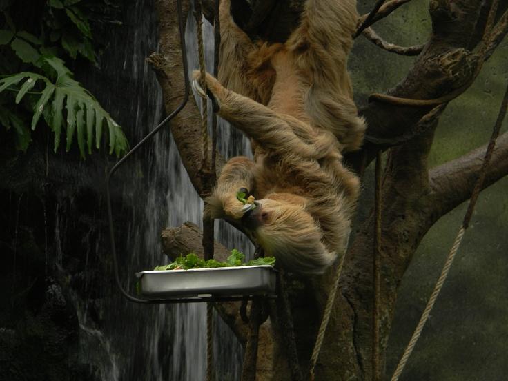 25 best omaha zoo images on pinterest omaha zoo the zoo and zoos omaha zoo ne publicscrutiny Image collections