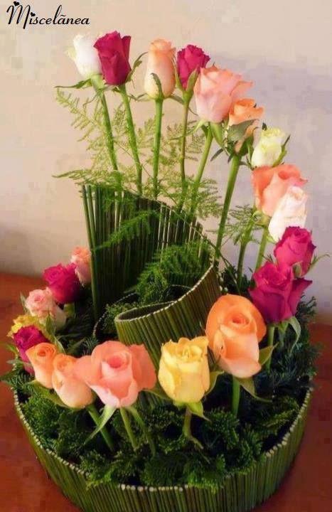 Roses!                                                       …                                                                                                                                                                                 Plus