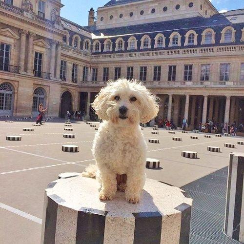 Asmara Designer Rugs Interview With Brian J. McCarthy   Brianu0027s Dog Daisy  ...