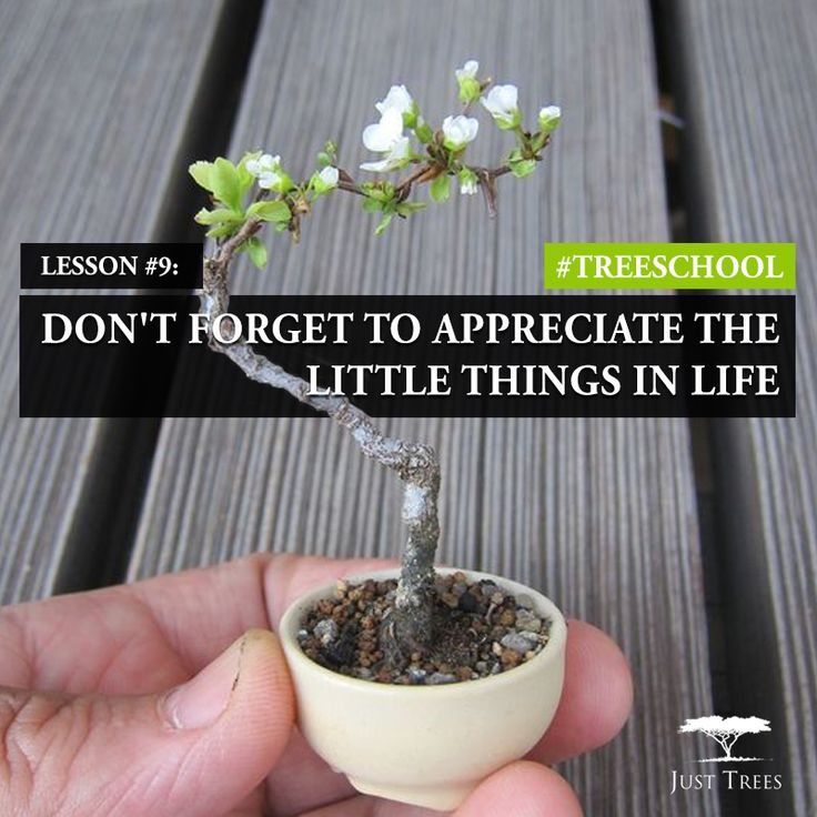 Lesson 9: Don't forget to appreciate the little things in life!