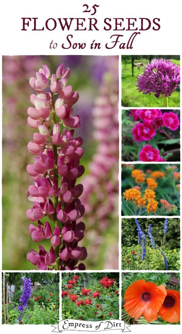 25 Flower Seeds To Sow In Fall Landscape Flower Seeds Flowers