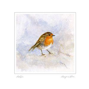 Robin blank Greetings Card by wildlife artist Roger Lee
