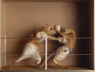 Boxing Squirrels Taxidermy