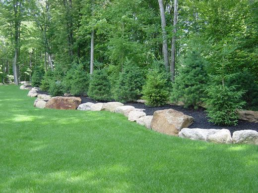 Berm with large boulders bordering and white pines planted for Large white garden rocks