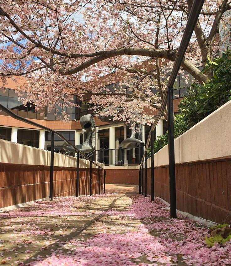 Spring time on Virginia Commonwealth University's Monroe Park Campus