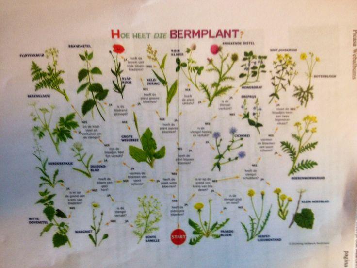 Kijkwijzer onderzoek bermplanten Natuur (Albertine van Slooten)