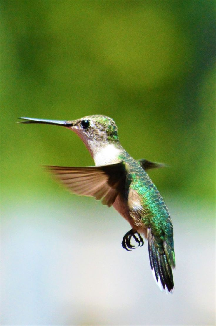 Feed hummingbirds for their winter trip and