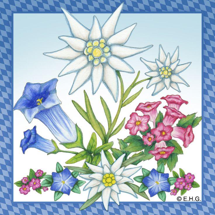Ceramic Tile Magnet: Edelweiss Flower