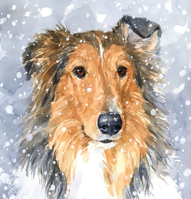 Collie in snow watercolor painting