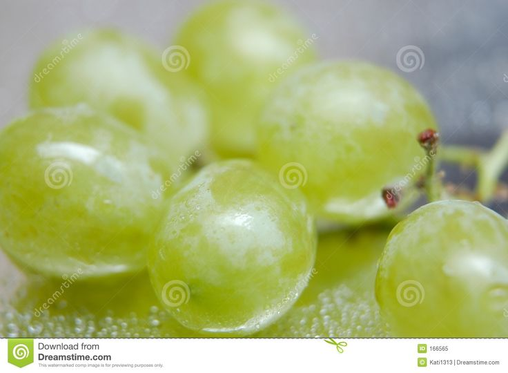 no copyright images of grapes | Wet Grapes II Royalty Free Stock Photo - Image: 166565