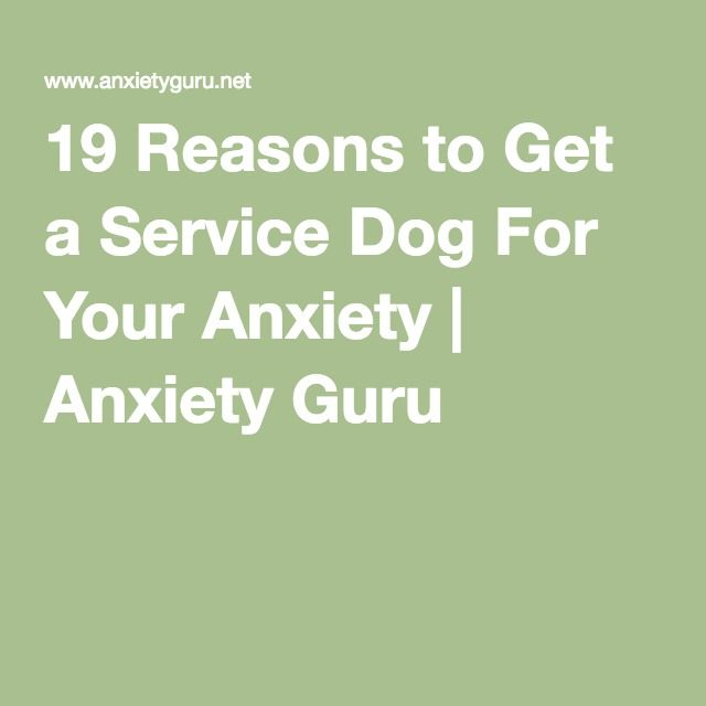 how to get rid of dog anxiety