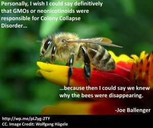 Colony Collapse Disorder: An Introduction « Biology Fortified, Inc.  In fact, we are having difficulties figuring out what factors are definitely causing the collapse of Honeybee colonies.  We can say it's not GMOs.