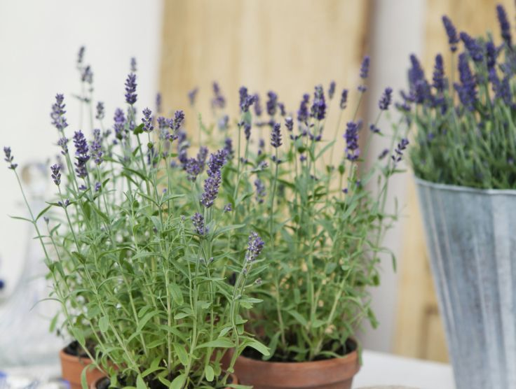 5 krukväxter som får dig att sova bättre.