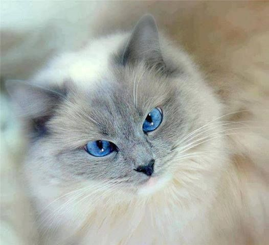 Beauty #cat