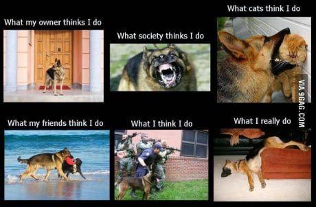German Shepherd Owners Will Know...