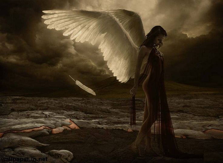 beautiful new angels beautiful wings sad angle hd