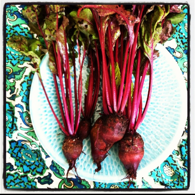 Fresh beetroot from veggie patch