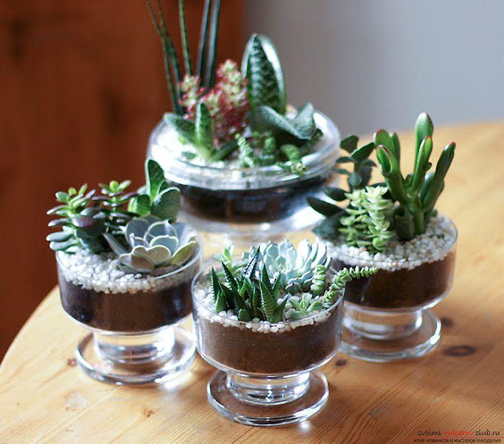 Создаем очаровательные настольные мини сады из сочных комнатных цветов – суккулентов и кактусов | svoimi-rukami-club.ru