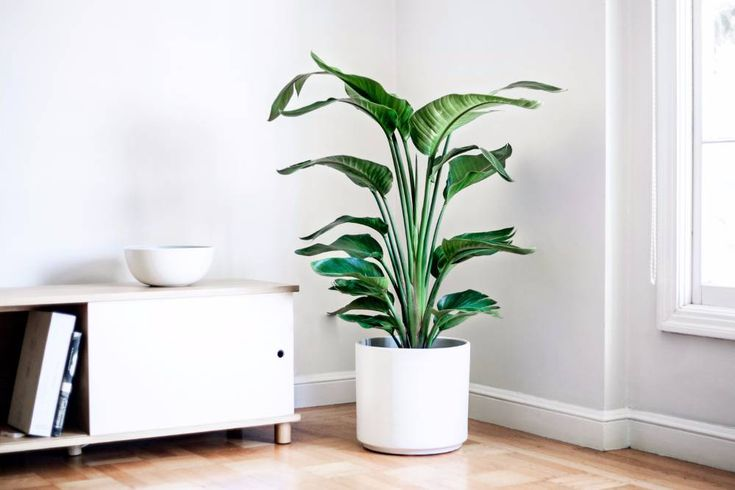 Léon & George - Free plant delivery in the San Francisco and Los Angeles areas