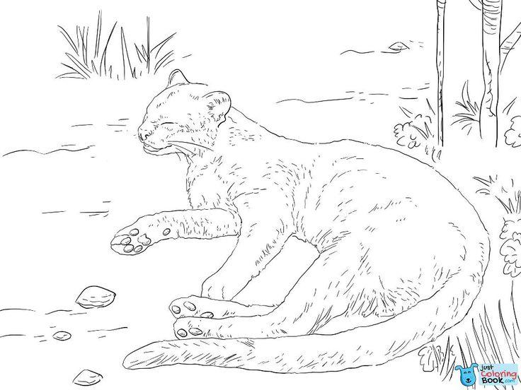 jaguarundi auf einem boden ausmalbilder zum ausdrucken   – Cat Coloring Pages