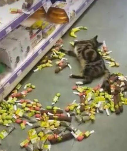 Top 10 Cats Who Have Had Enough Catnip Cats, I love cats