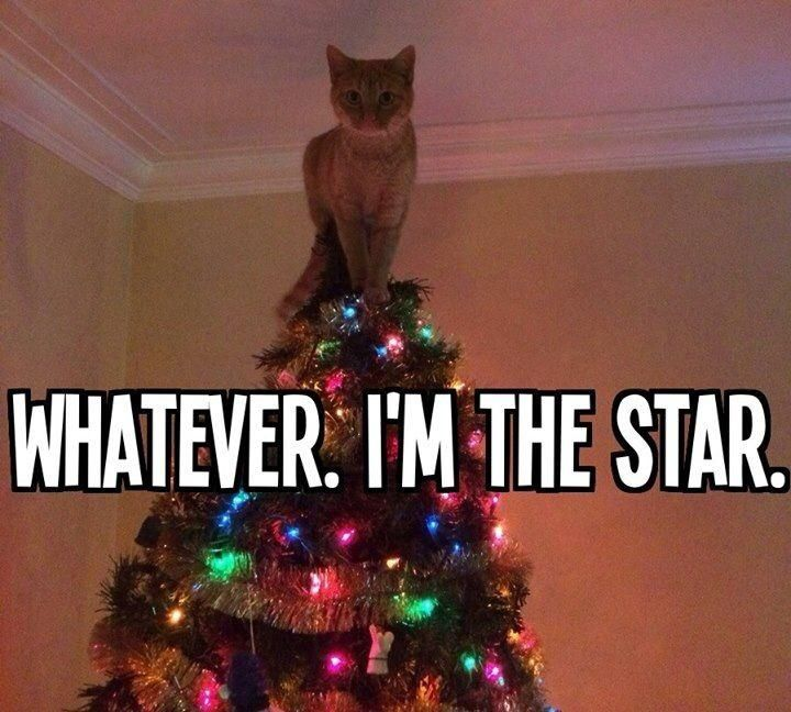 Are Christmas Trees Bad For Cats: Christmas Tree Star Cat Meme -