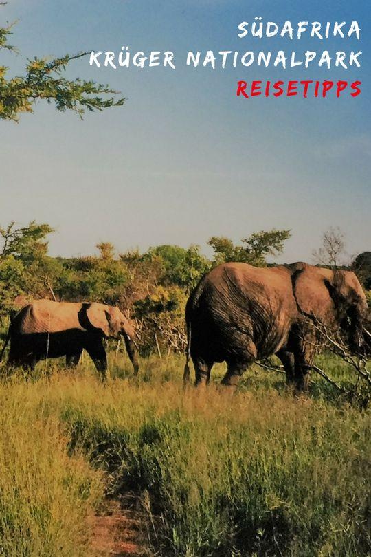 Krüger Nationalpark Südafrika | Reiseideen | Unterkunft |Reiseplanung | Routentipps #Südafrika #Nationalpark #Krüger #unterkunft #lodge